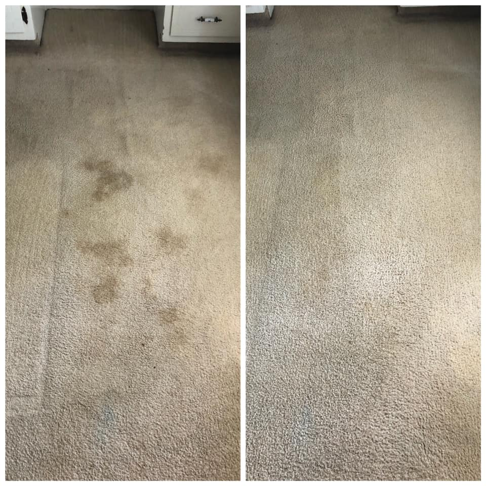 Pet Stain Removal Portland